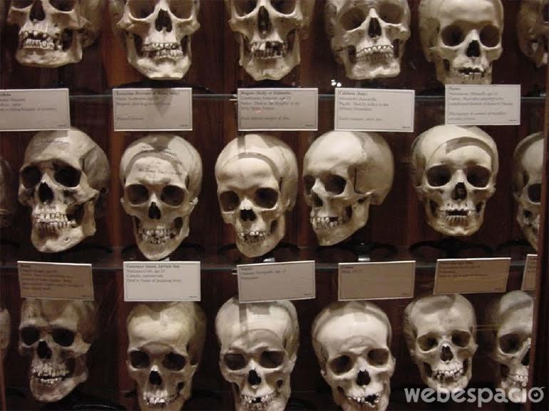 museo-medico
