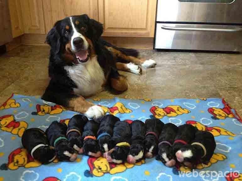 cuidando-a-los-cachorros