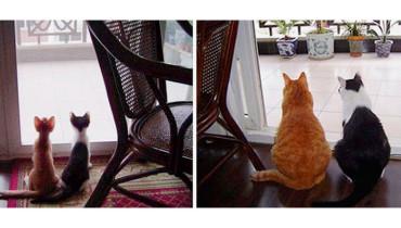 el-.antes-y-despues-de-los-gatos