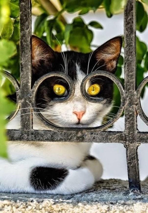 el-gato-espia