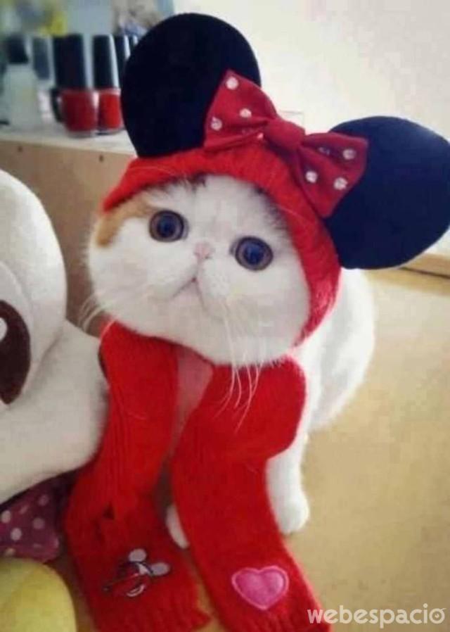 gato-al-estilo-mickey