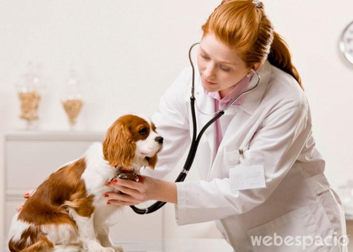 no-llevar-a-tu-perro-al-veterinario