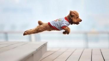 el-perro-salvador