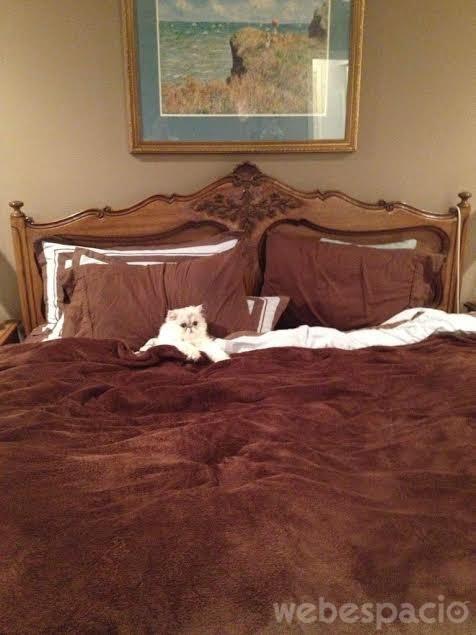 le-permitas-que-duerma-en-tu-cama