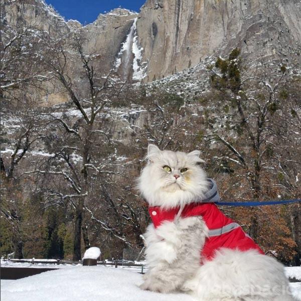 un-gato-viajero