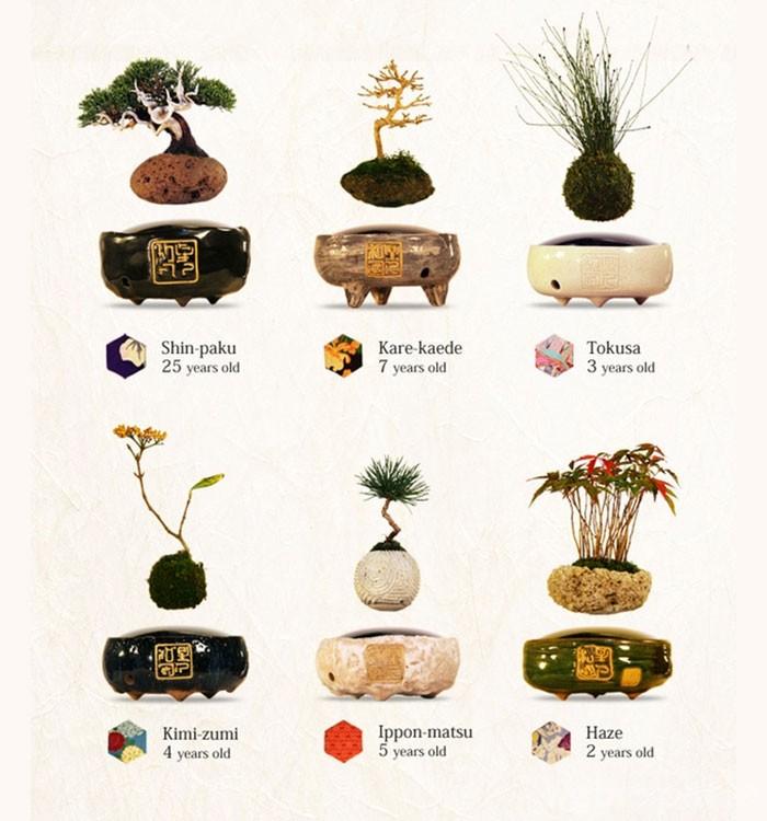 modelos arboles bonsai flotantes