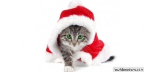 gatito vestido para navidad