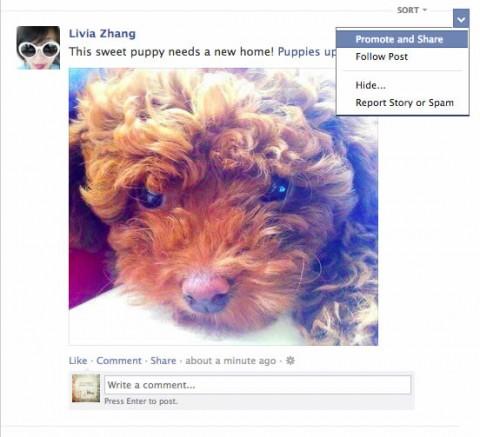 Facebook promocionar publicaciones de amigos