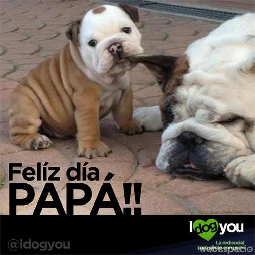 perrito_dia_del_padre