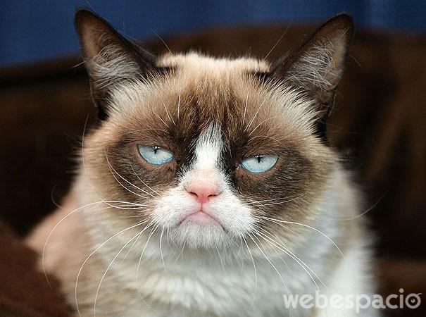 los-gatos-son-mas-virales-en-internet