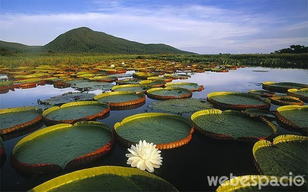 pantanal-brasil-naturaleza