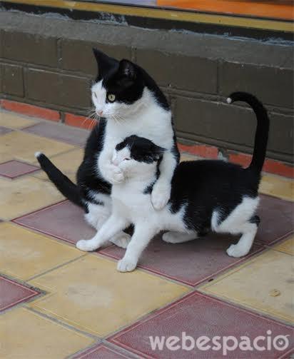 gato-hace-silencio-a-su-hijo