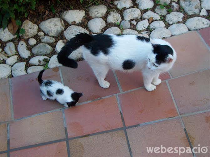 gatos con manchas iguales