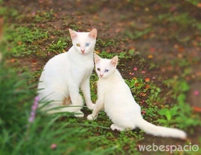 gatos-semejantes