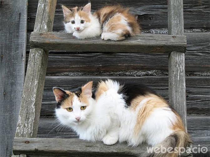 quedate-cerca-de-mama-gatos
