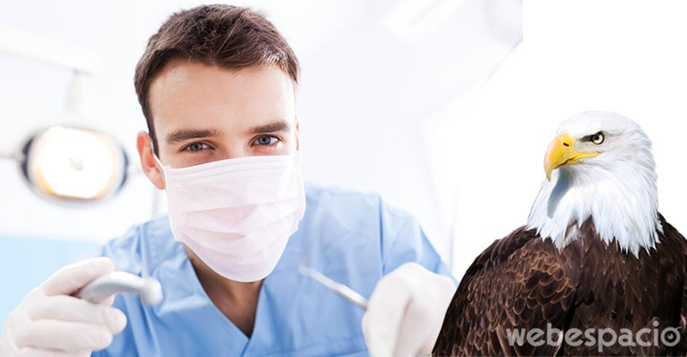 un habil dentista salva a ave malherida