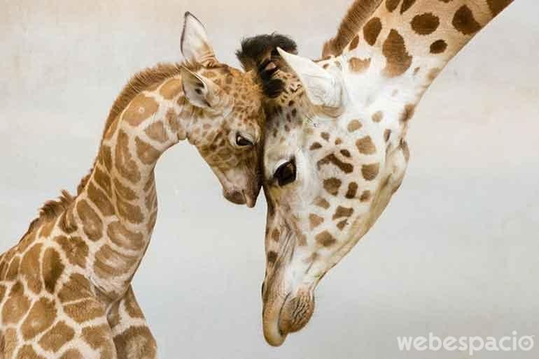 juego-de-jirafas
