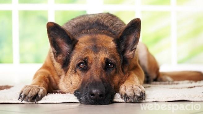 los-perros-entienden-si-estas-triste