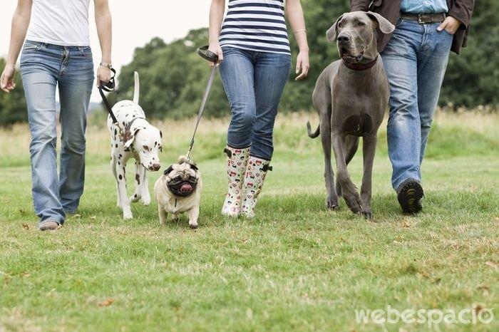 los-perros-te-mantienen-mas-activo