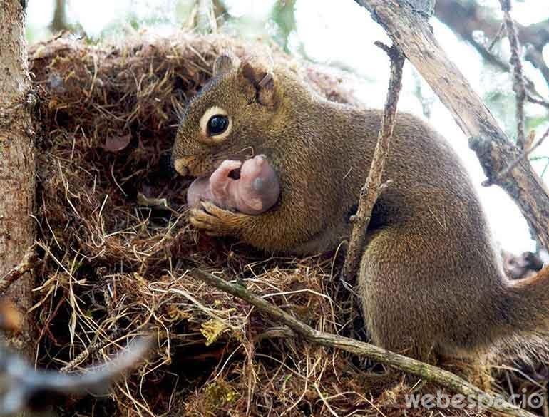 orgulla-madre-con-recien-nacido