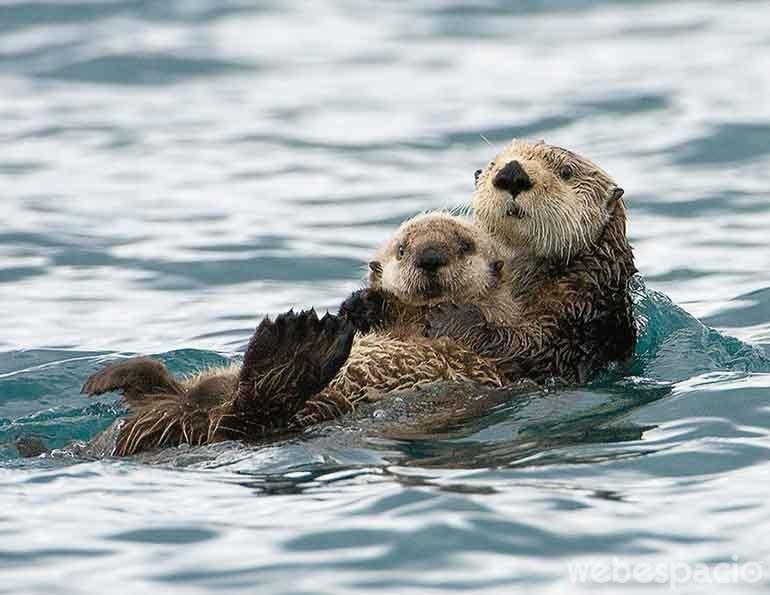 uy-ya-nos-vieron-nadando