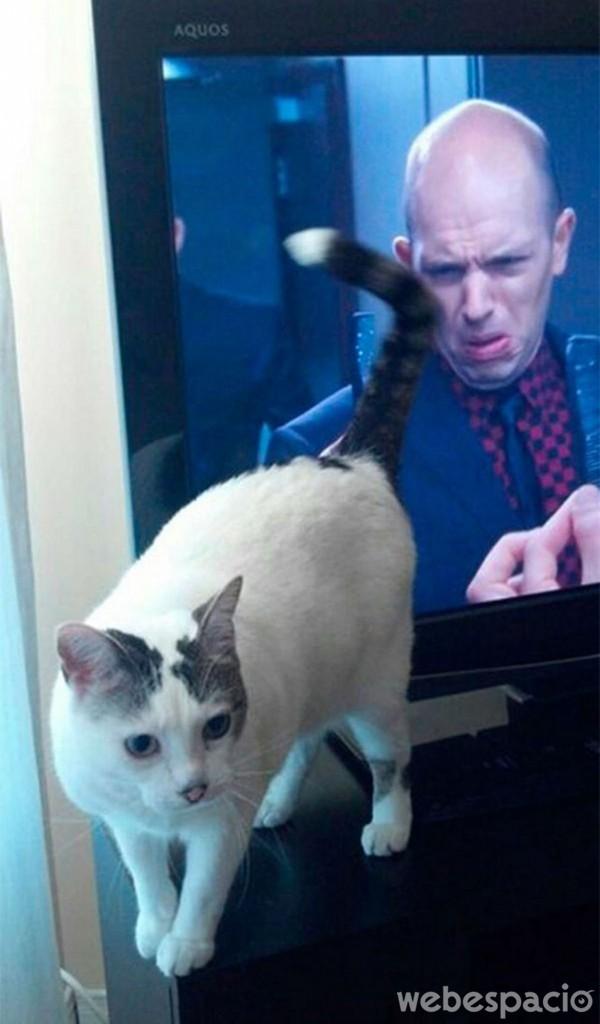 al-presentador-no-le-gusta-mi-gato