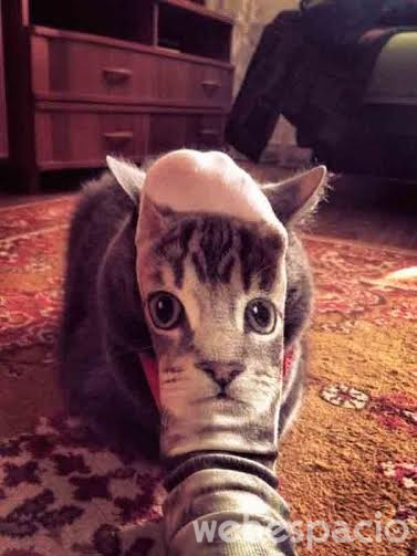 calcetines-de-gato