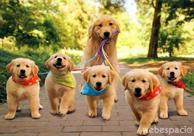 cuando-salimos-a-pasear-con-mama