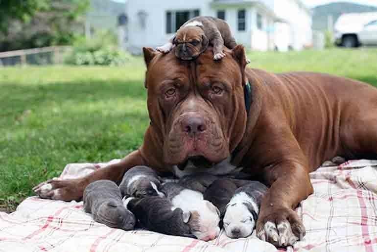 el-padre-actua-como-madre