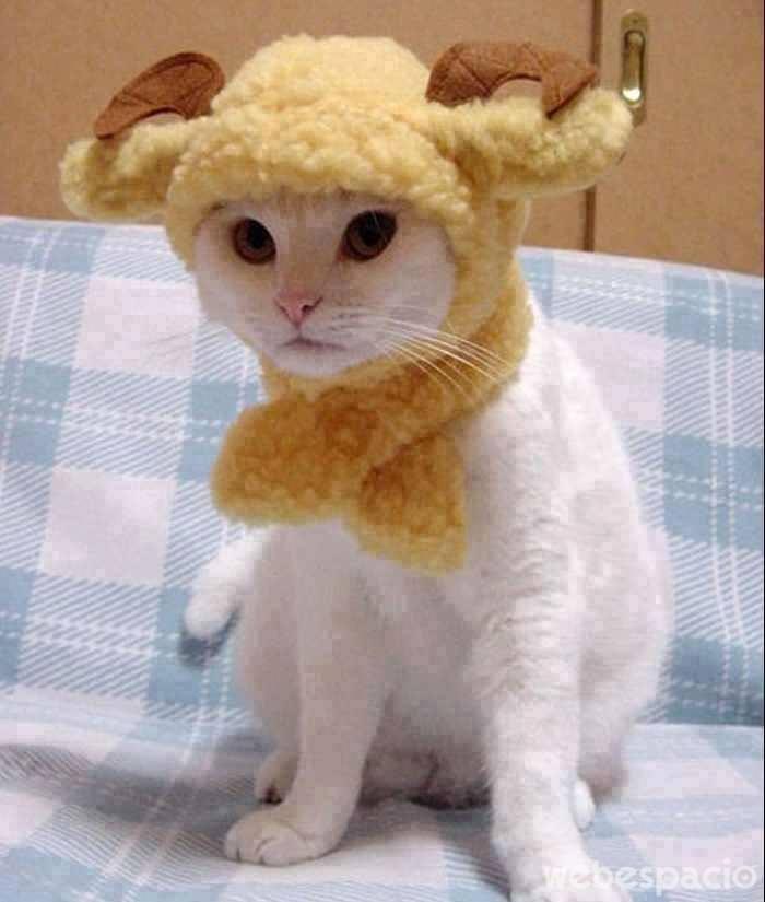 este-es-un-gato-oveja