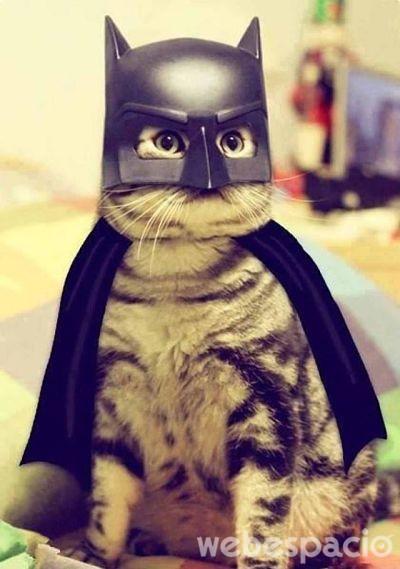 gato-batman_opt