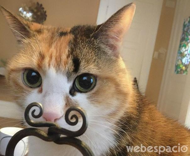 gato-con-bigotes