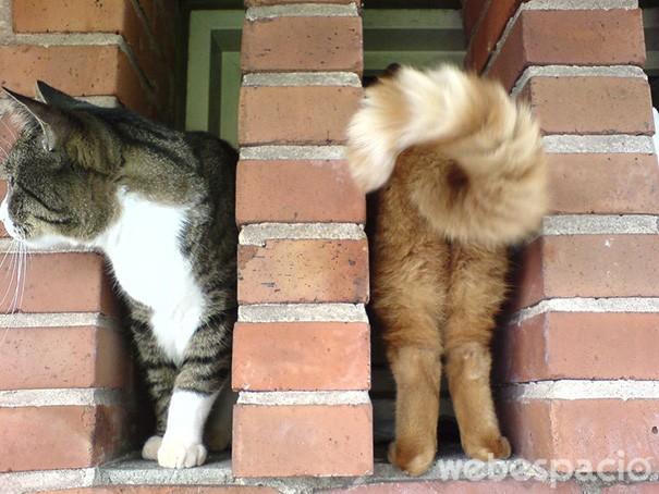 gato-de-dos-colores