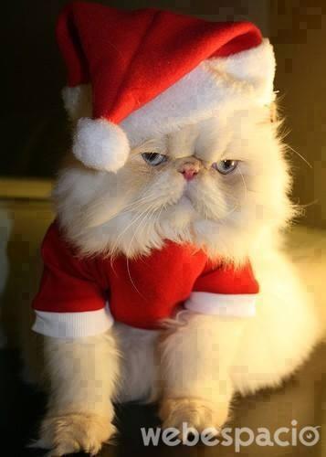 gato-de-navidad