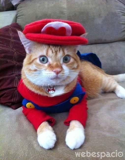 gato-fontanero