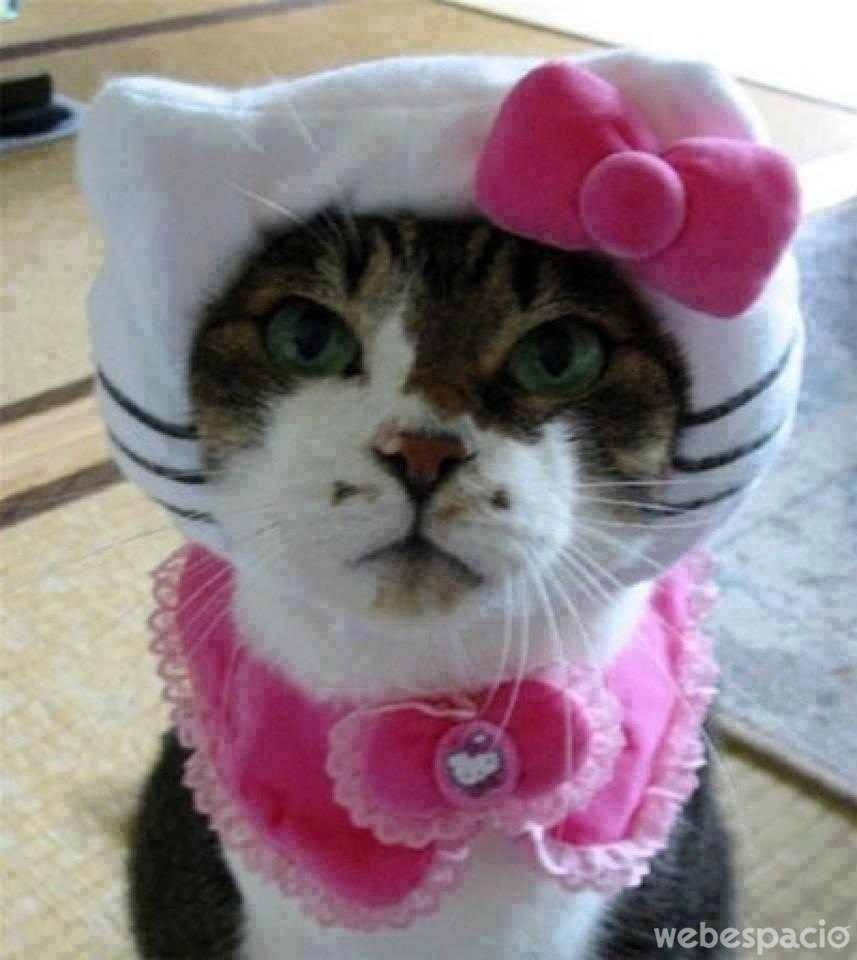 gato-hello-kitty
