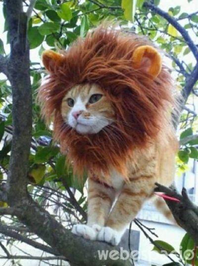 gato-leon_opt