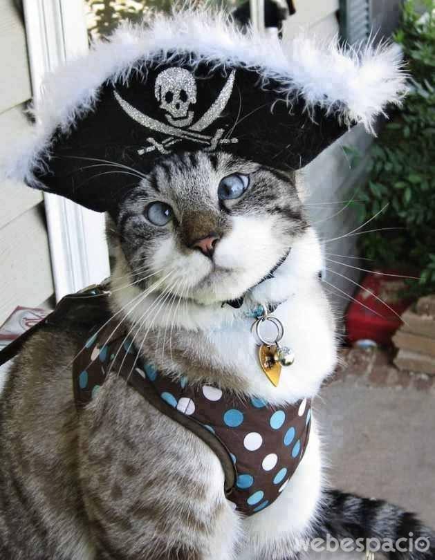 gato-pirata