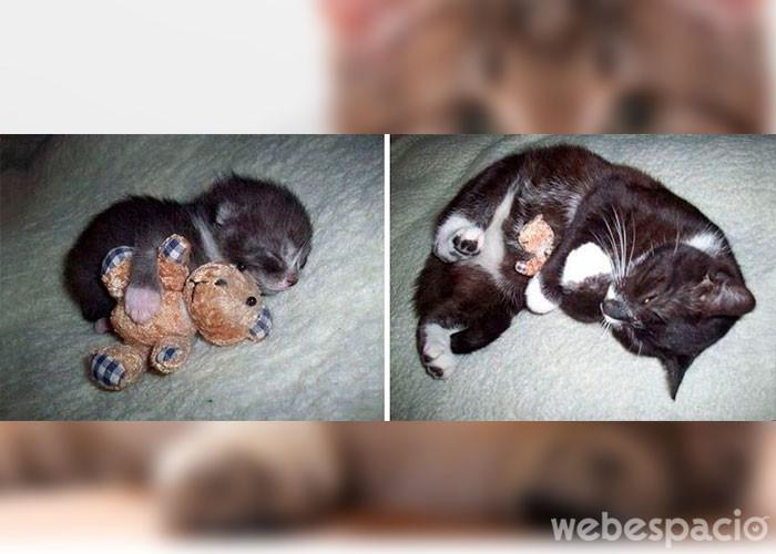 gato-y-oso-de-peluche