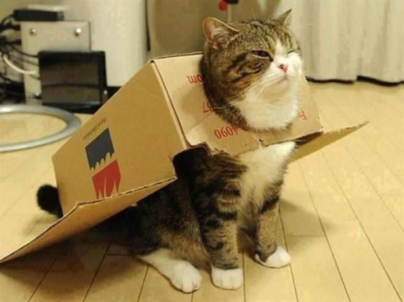 la-caja-del-gato