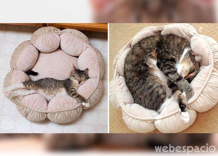 la-misma-cama