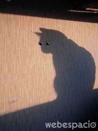 la-sombra-del-gato