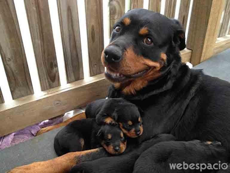 madre-sonriente-junto-a-sus-cachorros