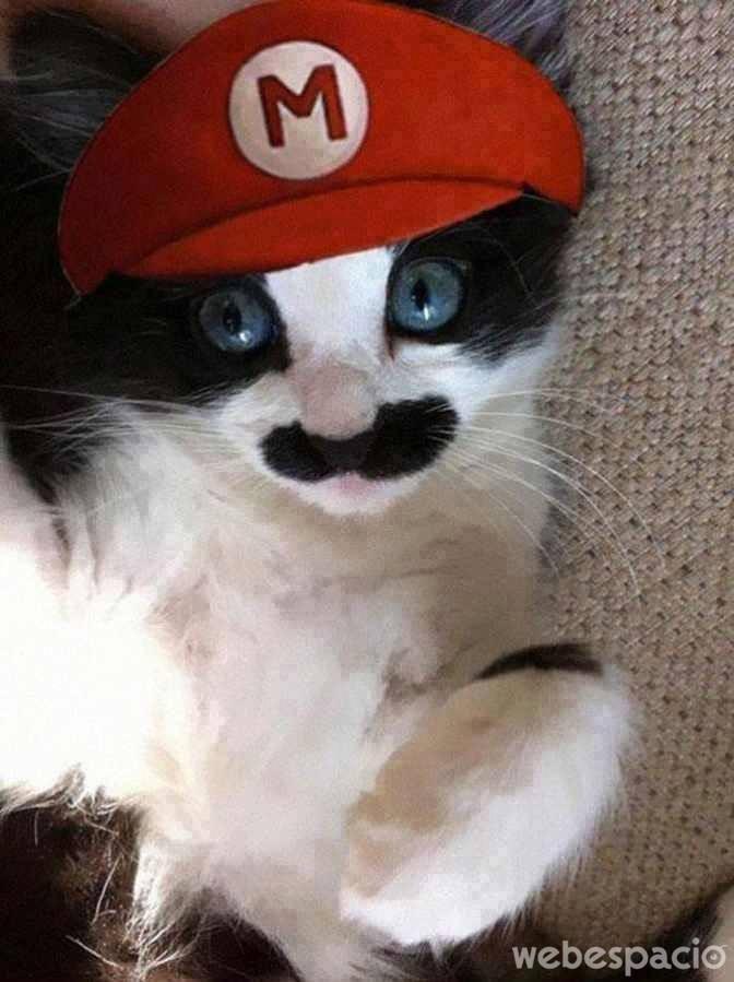 mario-bross-gato