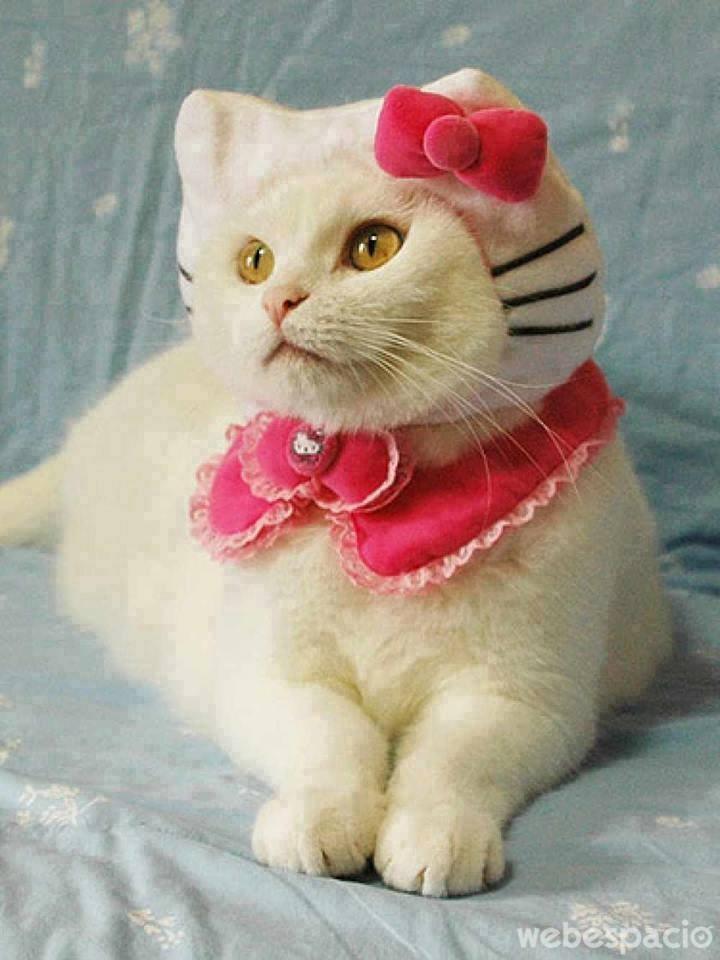 mas-de-hello-kitty