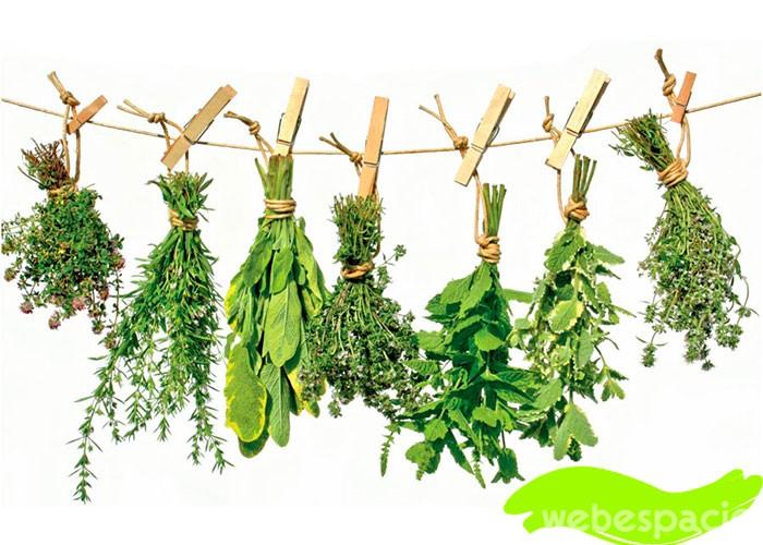 microondas-para-sercar-hierbas