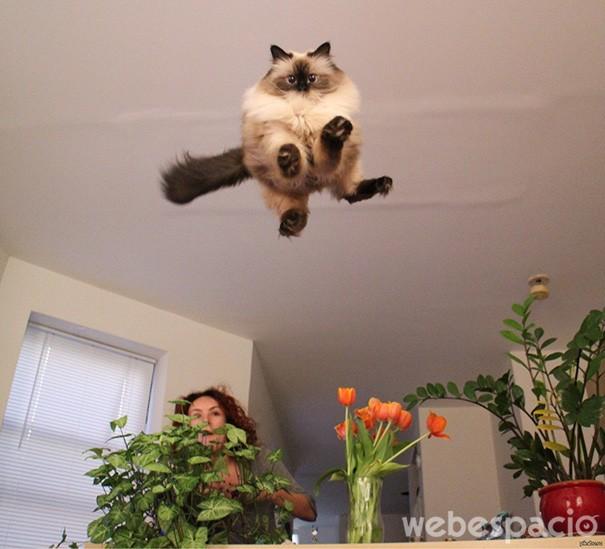 miren-estoy-volando