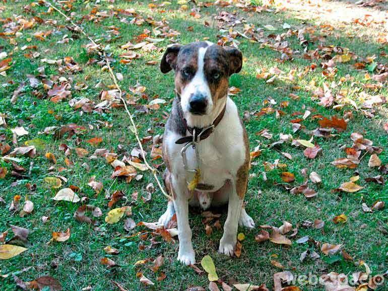 6 errores que no puedes cometer al tener un perro como mascota - Perros para tener en casa ...