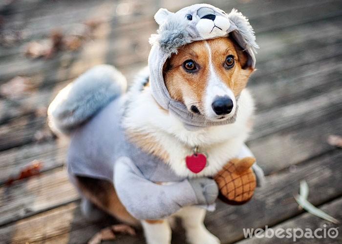 perro-excesivamente-carinoso-con-los-demas