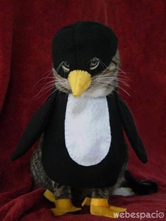 pinguino-gato